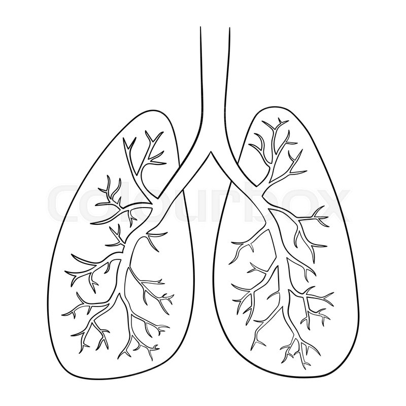 Vector Illustration Of Lungs. Doodle ... | Stock Vector | Colourbox