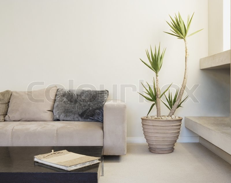 Modern Living Room With Potted Plant Can Be Used As Background Stock Photo