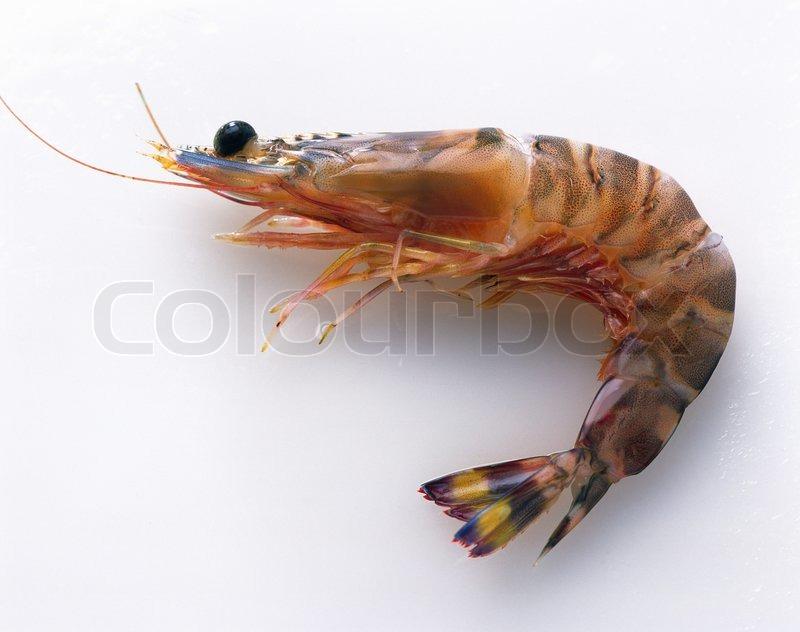 Supplier Shrimp Mail: Image Boiled Shrimp On White Background
