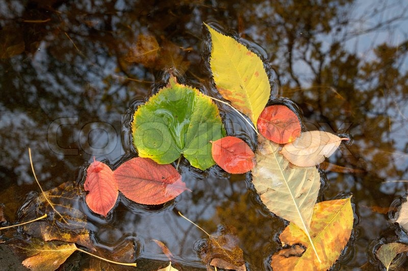 colour leaves on water fall stock photo colourbox