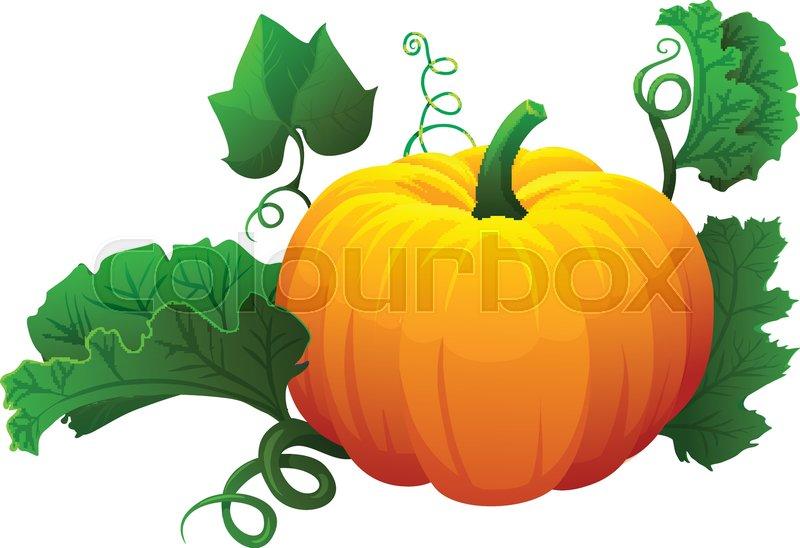 Halloween Pumpkin Vector.Orange Pumpkin Vector Illustration Stock Vector Colourbox