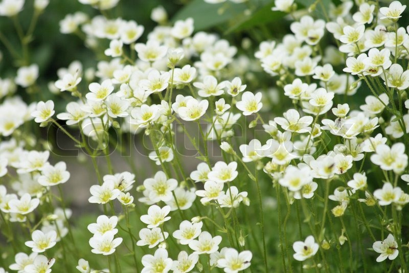White flower background stock photo colourbox mightylinksfo
