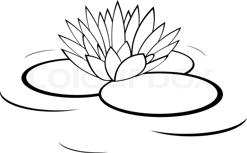 Vector monochrome illustration of water lily flower ...