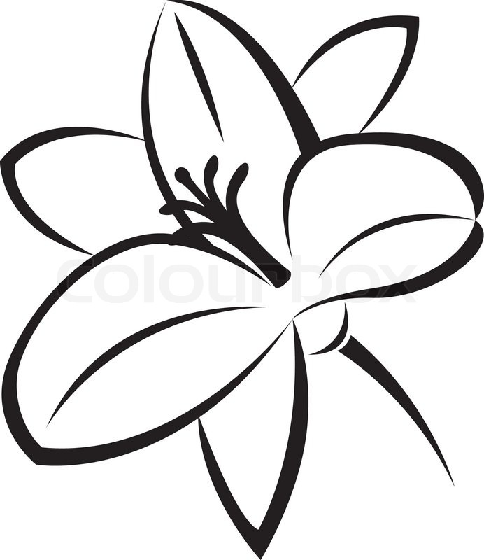 Vector monochrome illustration of lily flower | Stock ...