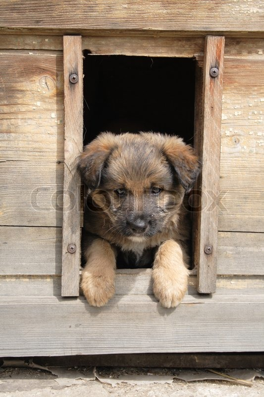 small fat dog in his house waiting stock photo colourbox rh colourbox com fat dog hot dogs fat dog hot dogs