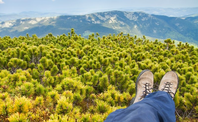Tourist resting in the bushes low pines on the mountain top, stock photo