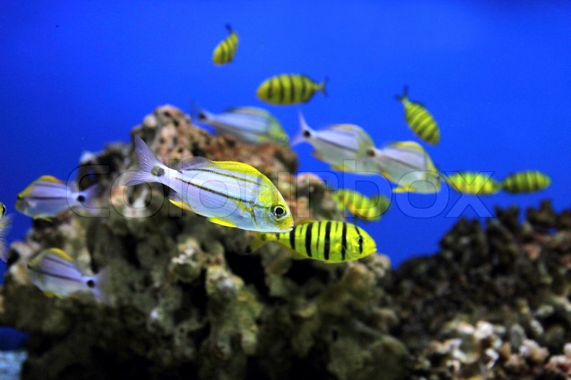 fisk i akvarium