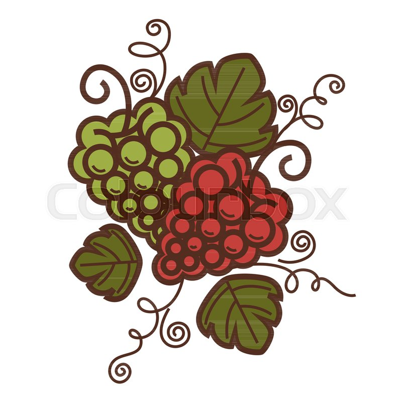 Grape vine vintage harvest icon for winemaking or wine production ...