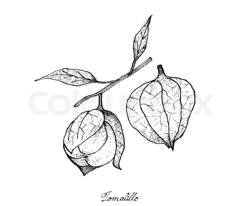 Fresh Fruit Illustration Of Hand Drawn Sketch Delicious Fresh