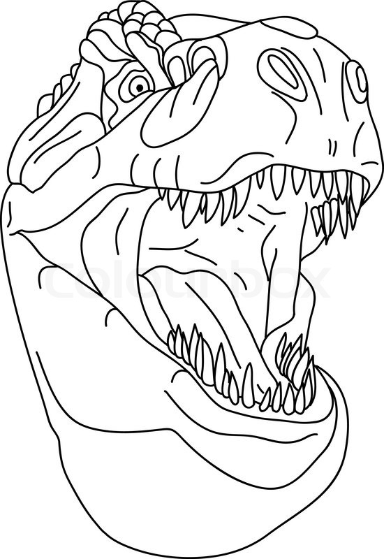 Line Drawing Face Vector : Vector t rex head isolated on background stock