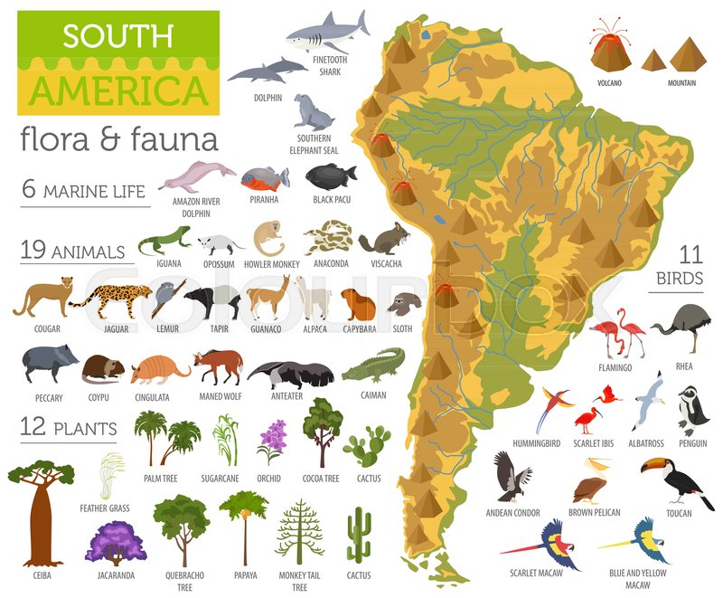 South America flora and fauna map flat elements Animals