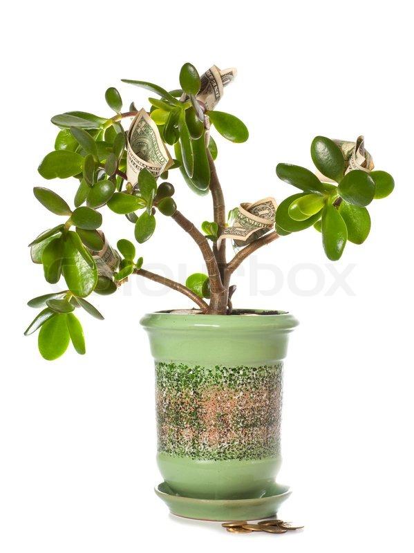 NEW 95 SUCCULENT PLANT FENG SHUI