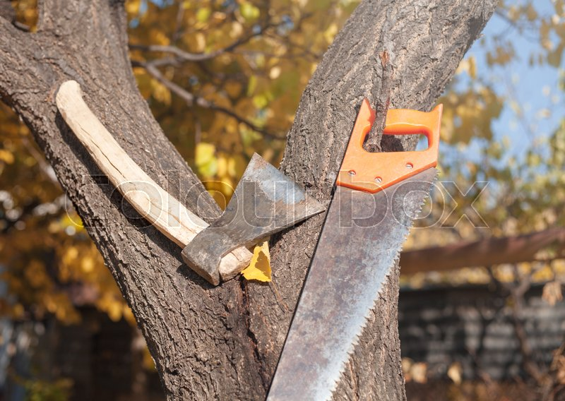 Axe and hand saw on a tree, stock photo