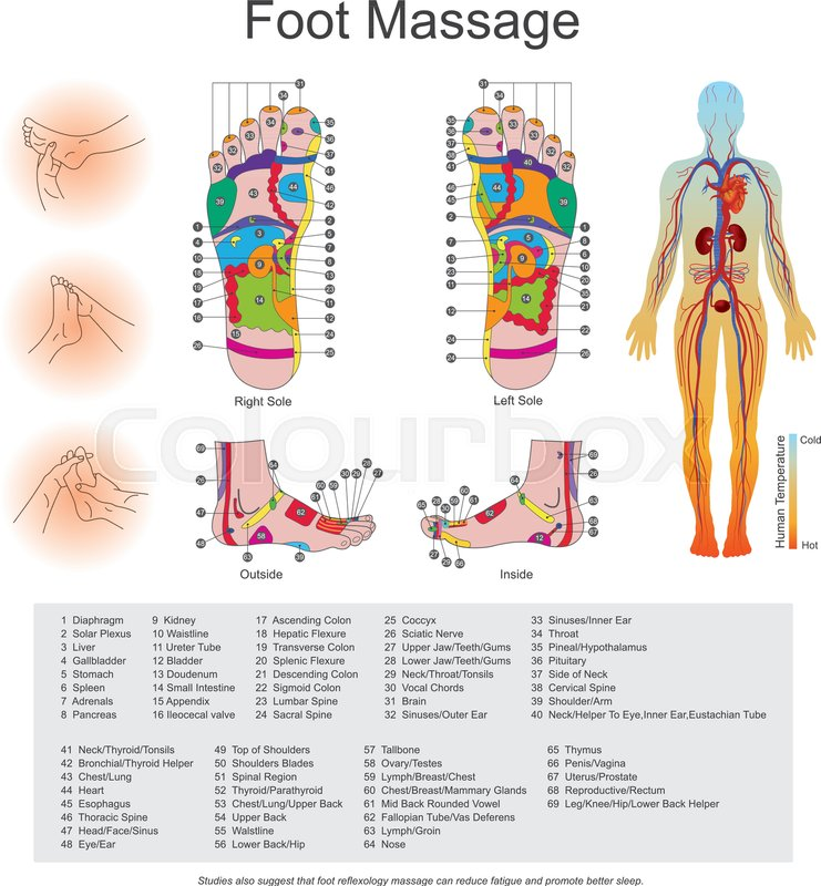 While Various Types Of Reflexology Related Massage Styles Focus On