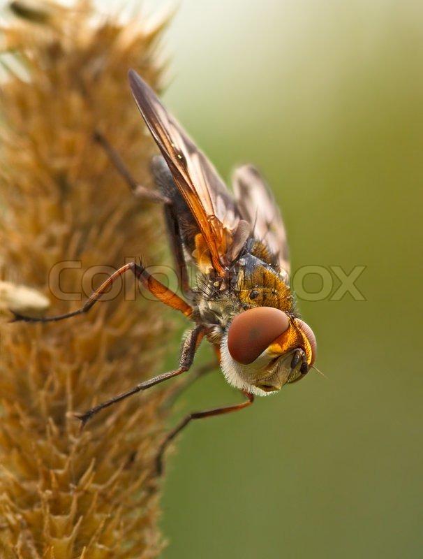 Wunderbar Fliegen Insekt Malvorlagen Galerie - Beispiel ...
