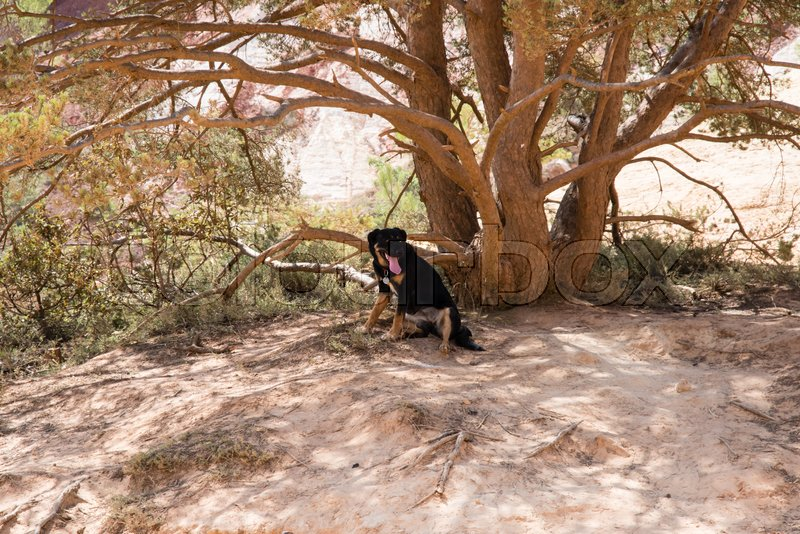Thirsty dog under the shadow of a tree, stock photo
