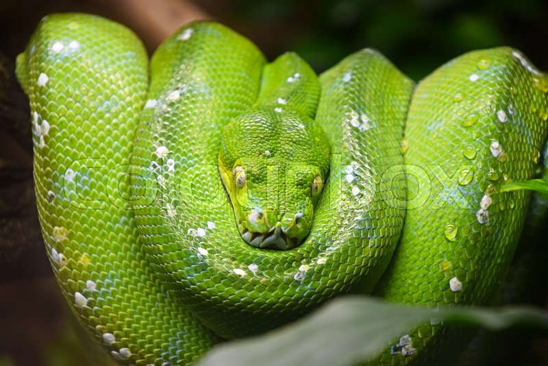 Close Up Portrait Of Beautiful Green Stock Photo