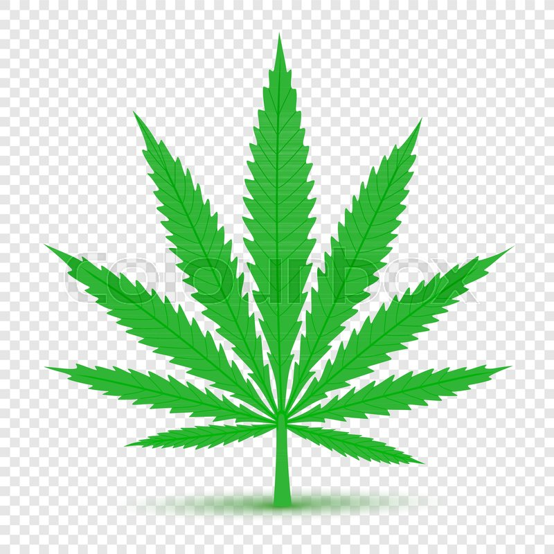 Cannabis Plant Icon With Shadow On Transparent Background Hemp