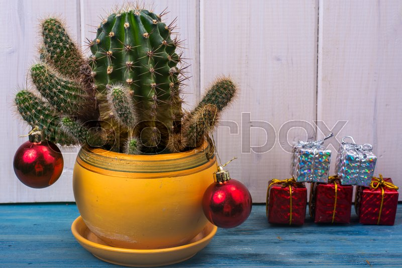 new year in tropical hot climate concept cactus as christmas tree with toy and gift boxes studio photo stock photo colourbox