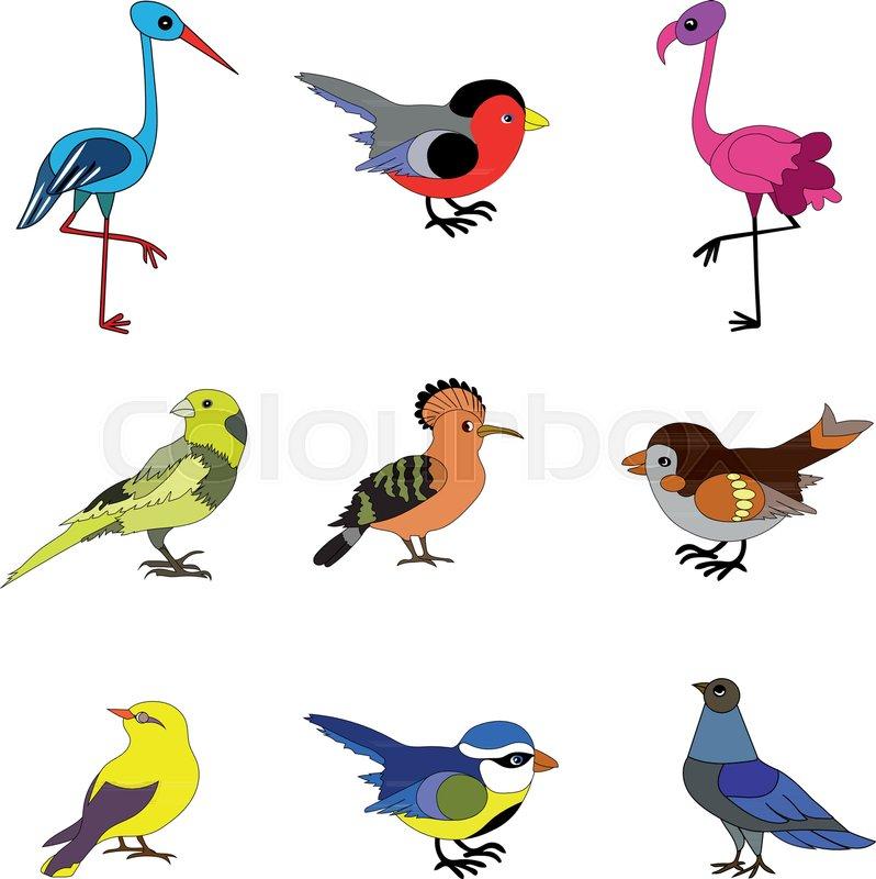 birds vector collection of european birds such as dove sparrow rh colourbox com bird vector graphics bird vector free