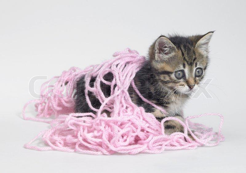 Funny Dog Cat Yarn Video