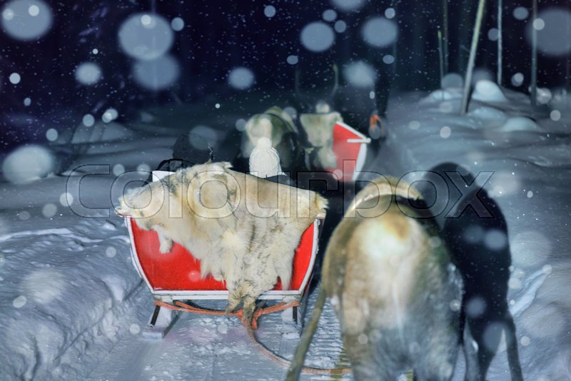People in reindeer sledding at night safari in the forest of Rovaniemi, Lapland, Finland. Snowfall Toned, stock photo