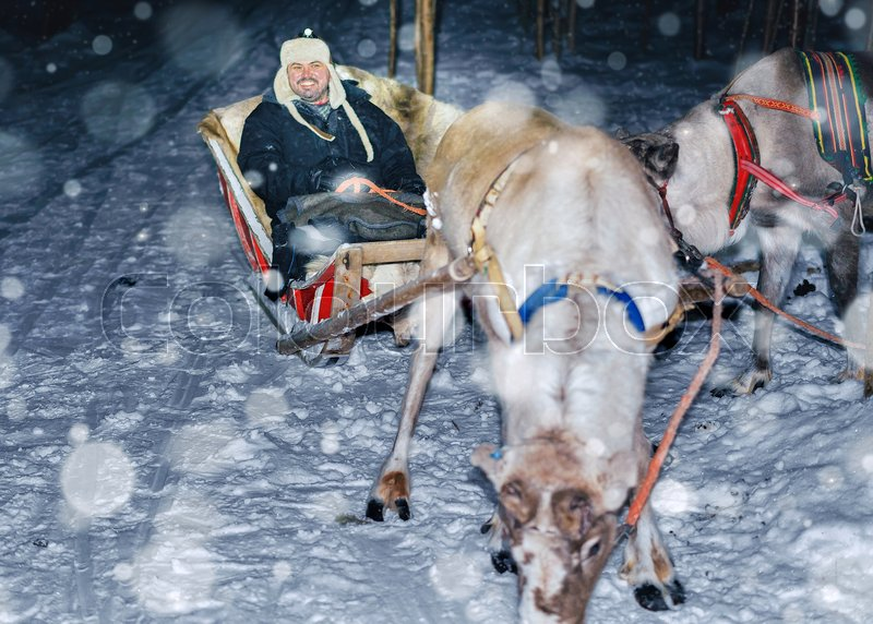 Man in reindeer sleigh at night safari in the forest, Rovaniemi, Lapland, Finland. Snowfall Toned. Selective focus, stock photo