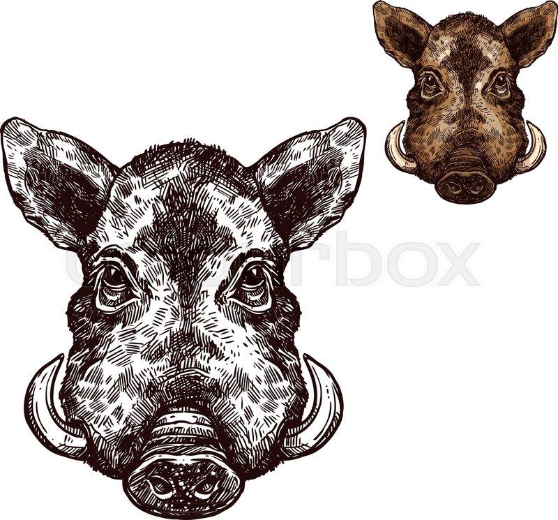 Boar Wild Animal Sketch Vector Icon Muzzle Head Of Wild Aper Swine
