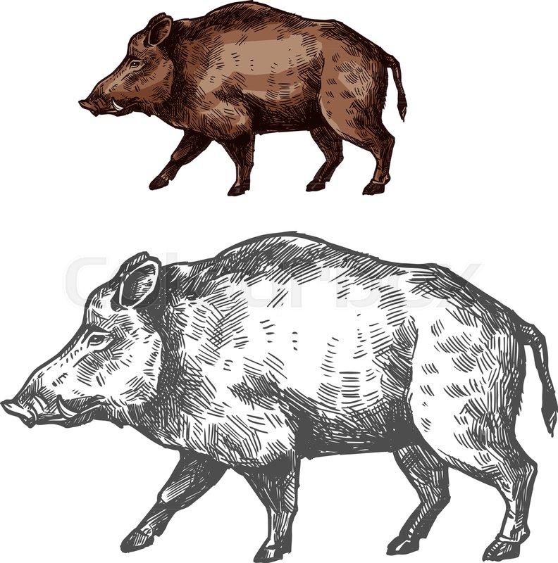 Boar Wild Animal Sketch Vector Icon Side View Wild Aper Swine Or