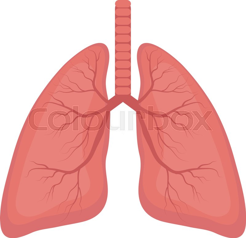 Lungs Icon Flat Style Internal Organs Of The Human Design Element
