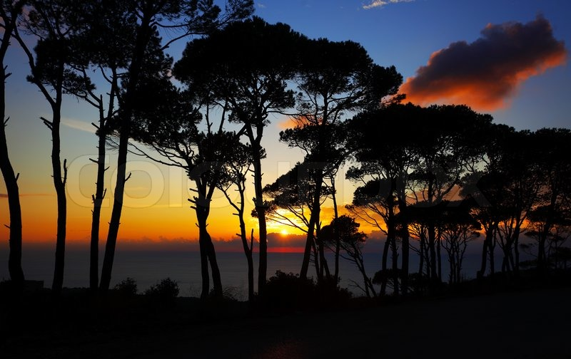 Colorful Sunset In The Pine Forest Warm Sky With Bright
