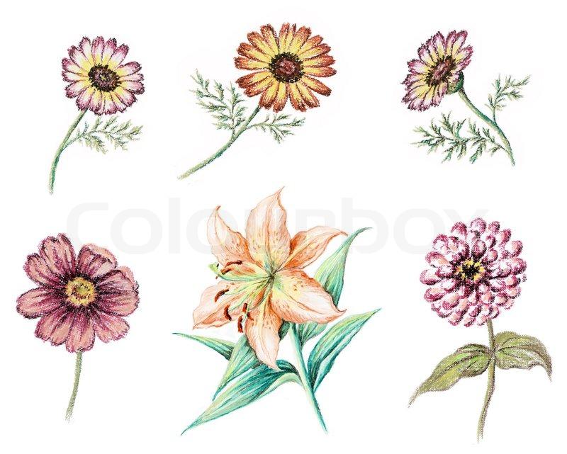 Bild Pastell Hand Zeichnen Auf Weissem Stockfoto Colourbox