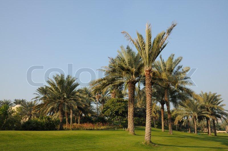 Green Tree Property Management Abu Dhabi