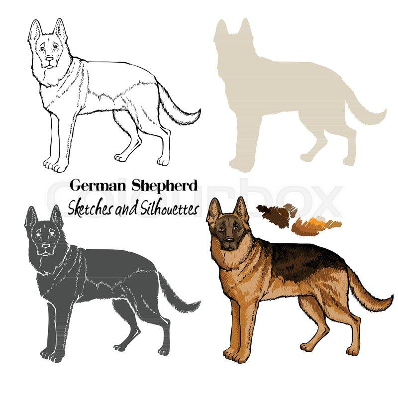 Hand Drawn Dogs Sketches German Shepherd Vector Illustration - German-shepherd-drawings