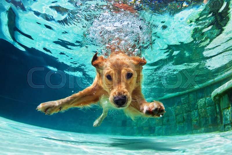 Puppy In Swimming Pool Play With Fun