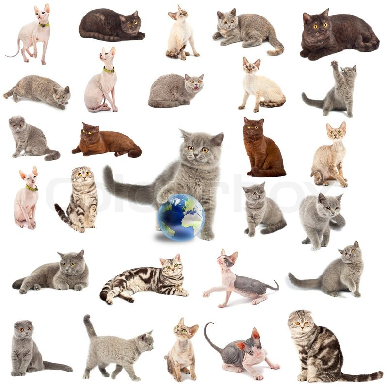 Collection of a cats in different poses isolated over ...
