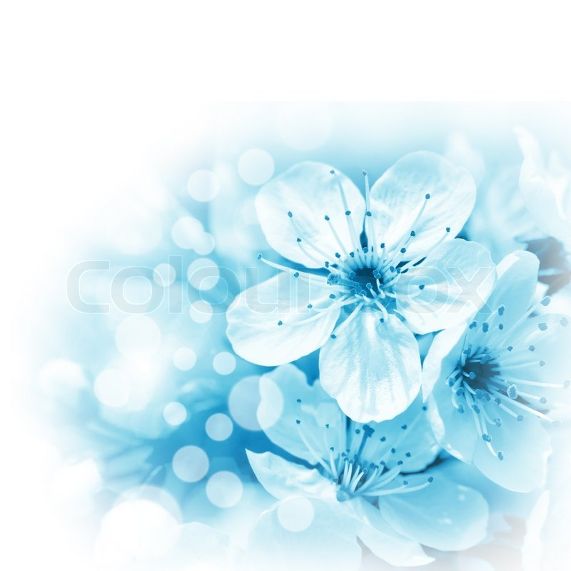 Blue Flowers On White Background Stock Photo Colourbox