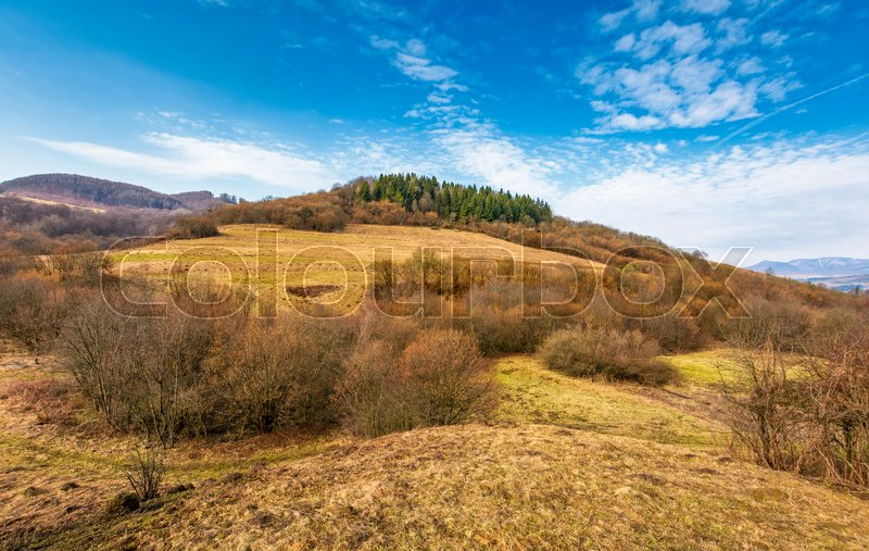 Forest on a hill side meadow in high mountains. beautiful stpringtime landscape under the blue sky, stock photo