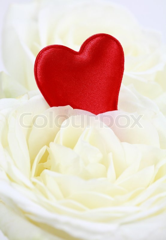 Red Hearts In White Rose Symbol Of Love Stock Photo Colourbox