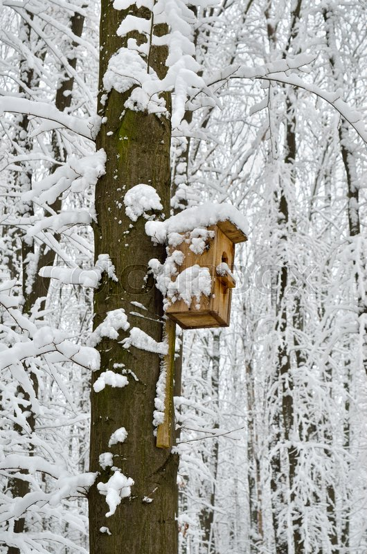 Birdhouse, protection from cold and bad weather for birds, stock photo