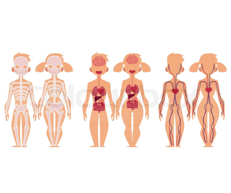 Set Of Educational Anatomy Chart Stock Vector Colourbox