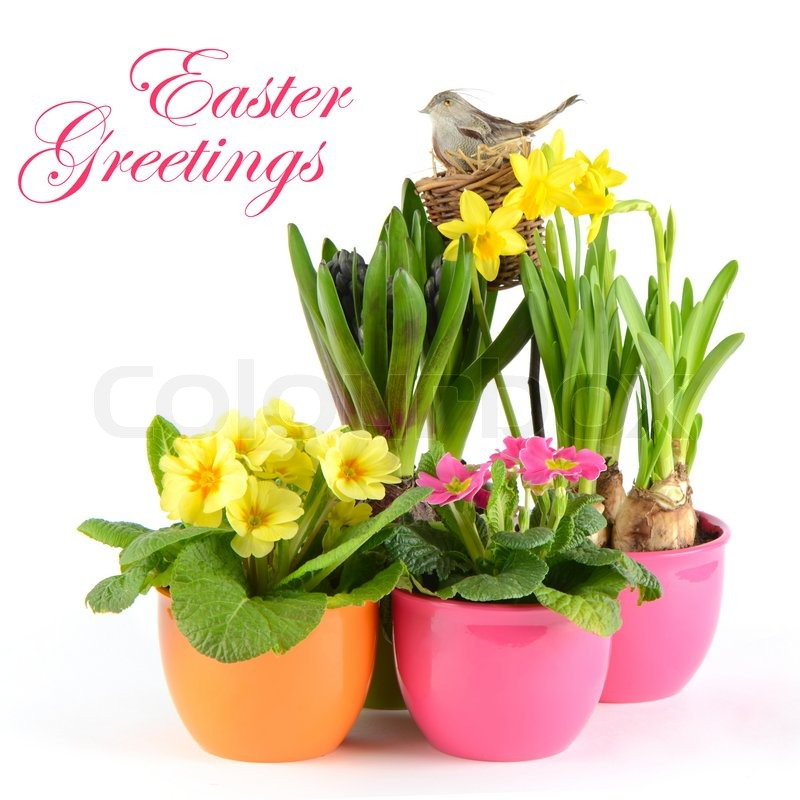 Stock image of 'Colorful spring flowers easter decoration hyacinth, pink primulas, yellow daffodils'