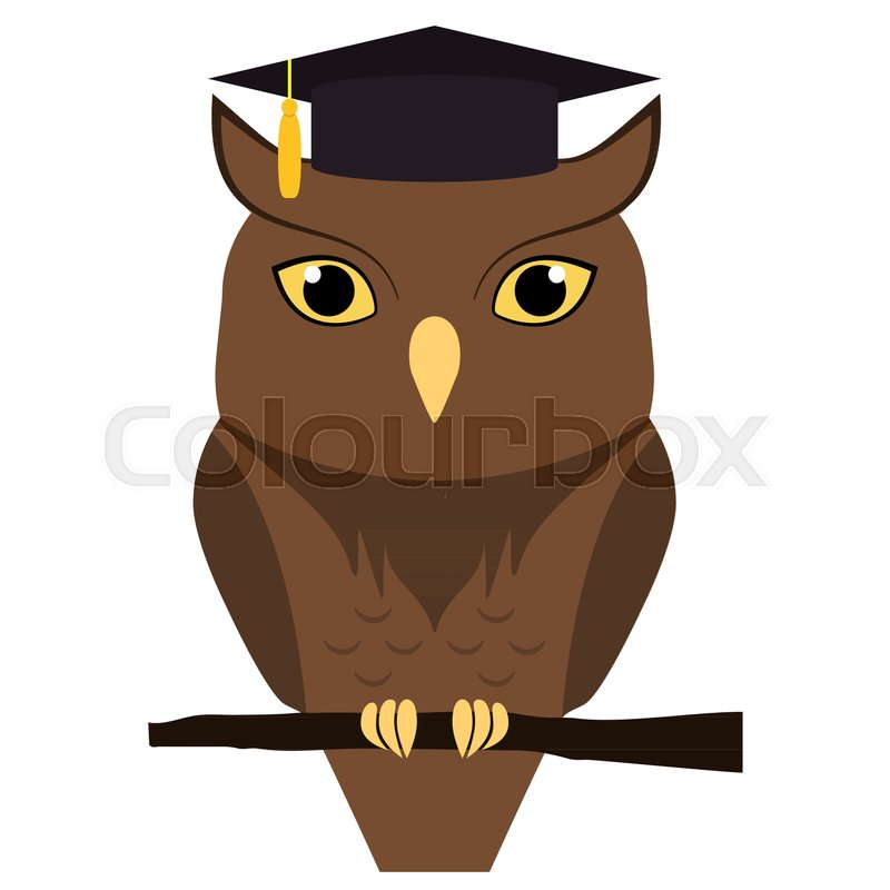 cute owl with graduation hat on head isolated on white vector flat