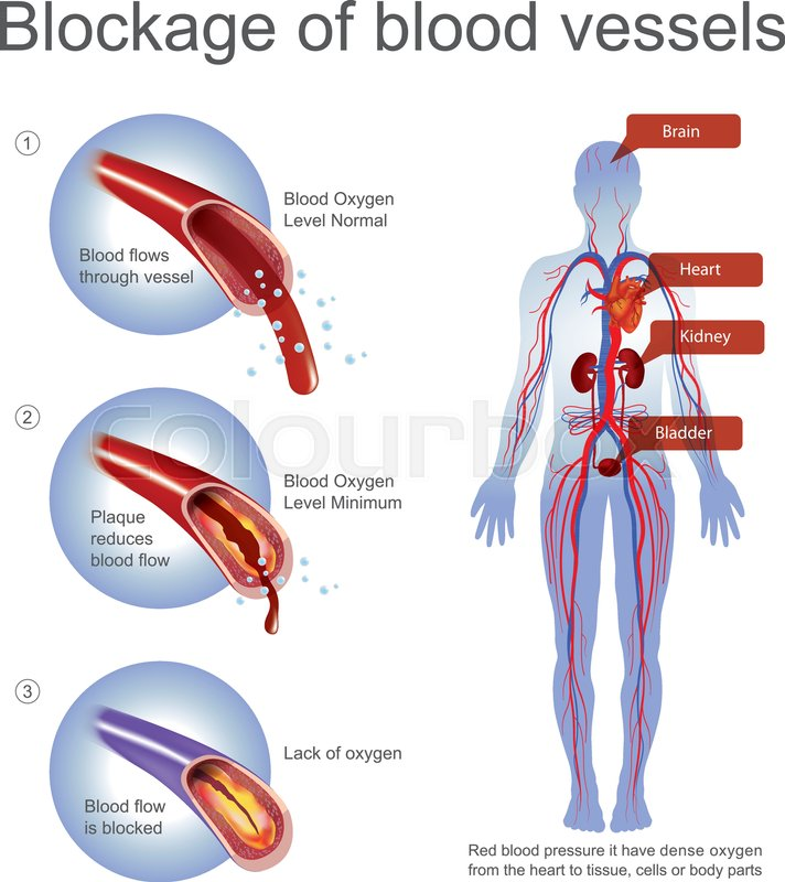 Red blood pressure it have dense oxygen from the heart to tissue ...