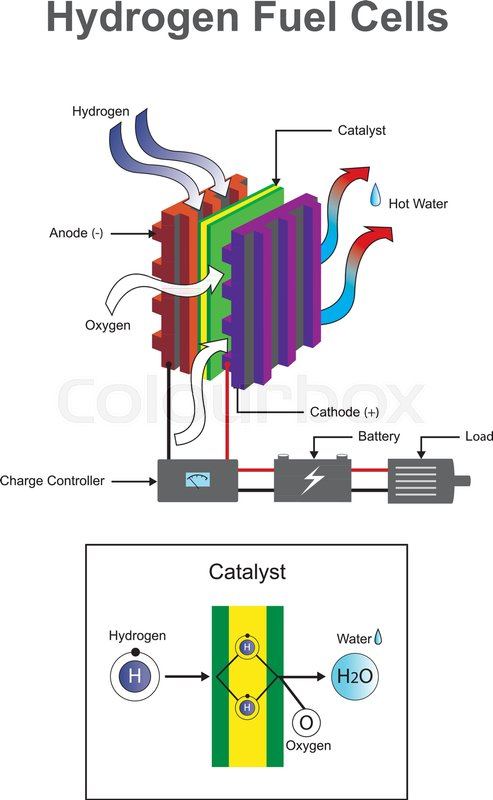 Hydrogen is a chemical element with chemical symbol h and atomic hydrogen is a chemical element with chemical symbol h and atomic number 1 vector info graphic stock vector colourbox ccuart Gallery
