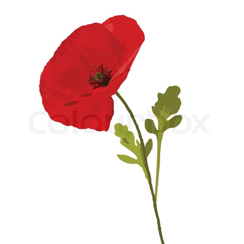 Red poppy with two green leaves on white background stock vector red poppy with two green leaves on white background vector mightylinksfo Choice Image
