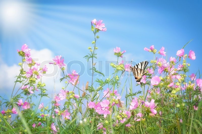 Grass with pink flowers on summer meadow stock photo colourbox mightylinksfo
