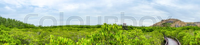 Panorama view from high scenic point of Mangrove forest and wood bridge nature trails with blue sky and cloud.Tropical Nature view, stock photo