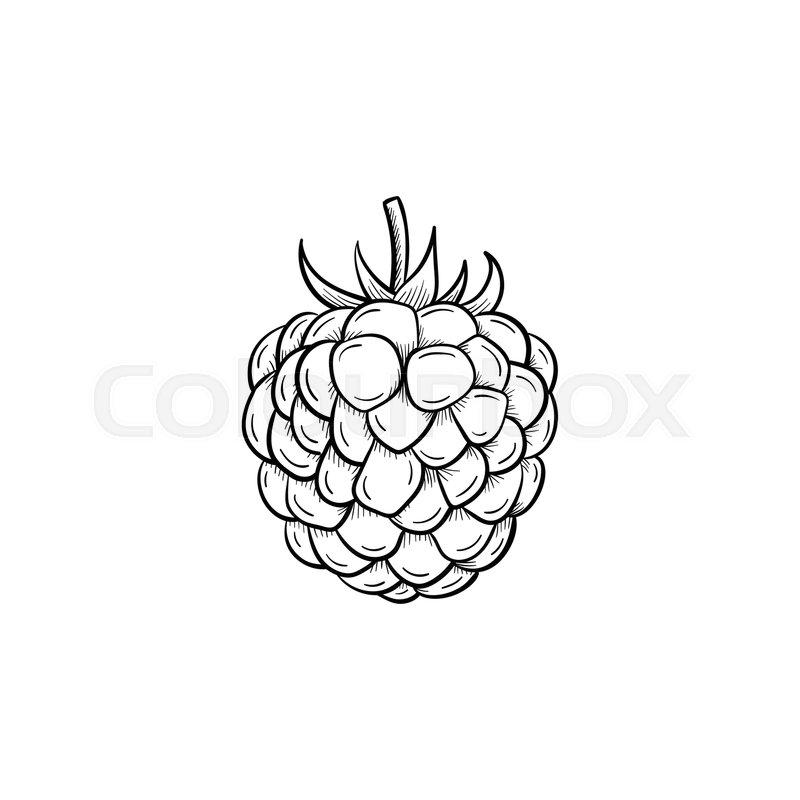Raspberry Plant Drawing Vector hand drawn Rasp...