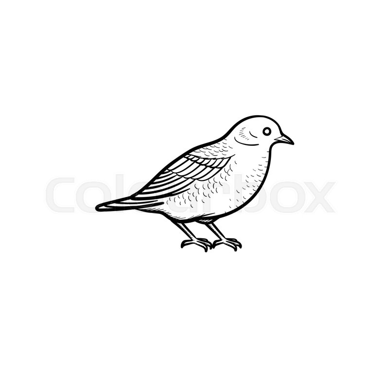 Vector Hand Drawn Bird Outline Doodle Icon. Bird Sketch Illustration For Print Web Mobile And ...